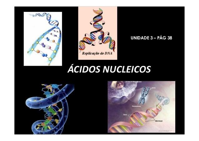 ÁCIDOS NUCLEICOS UNIDADE 3 – PÁG 38