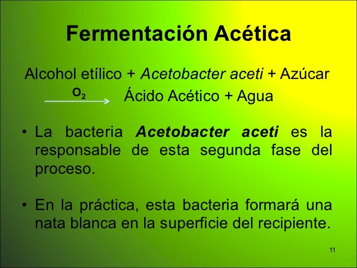 Fermentación AcéticaAlcohol etílico + Acetobacter aceti + Azúcar      O2       Ácido Acético + Agua• La bacteria Acetobact...