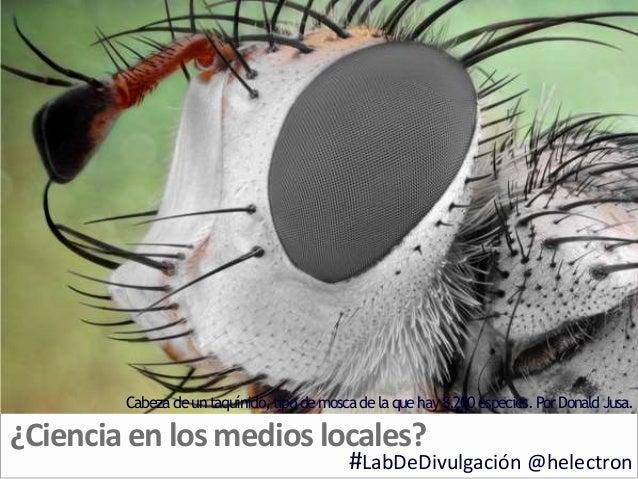 ¿Cienciaen losmedioslocales? #LabDeDivulgación @helectron Cabezadeuntaquínido, tipodemoscadelaquehay8.200especies. PorDona...