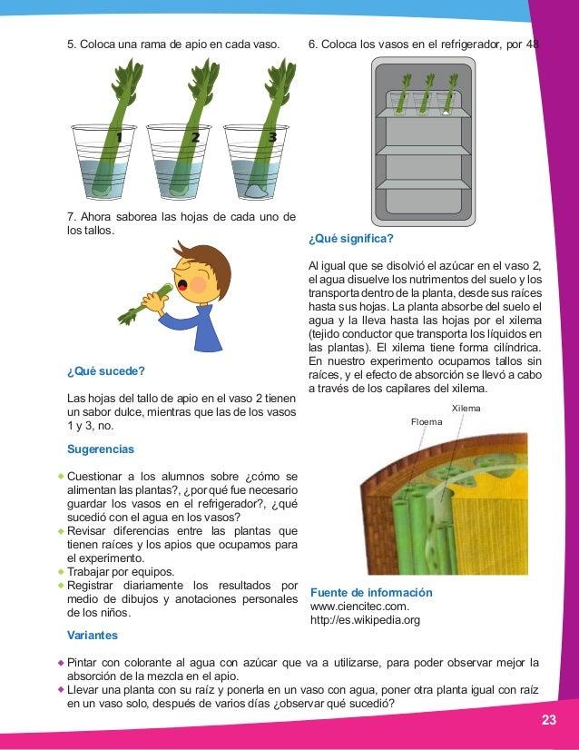 Ciencia preescolar manual experimentos