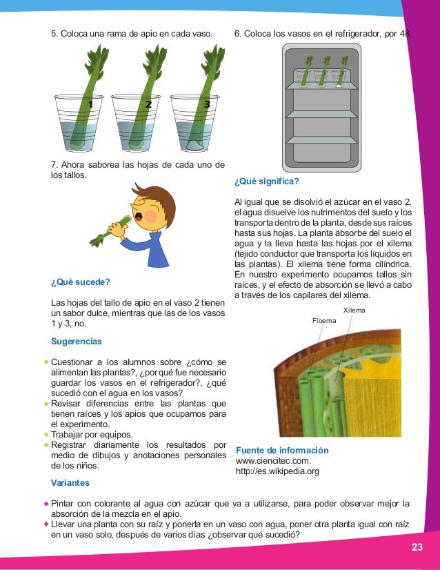 Ciencia preescolarmanualexperimentos2011