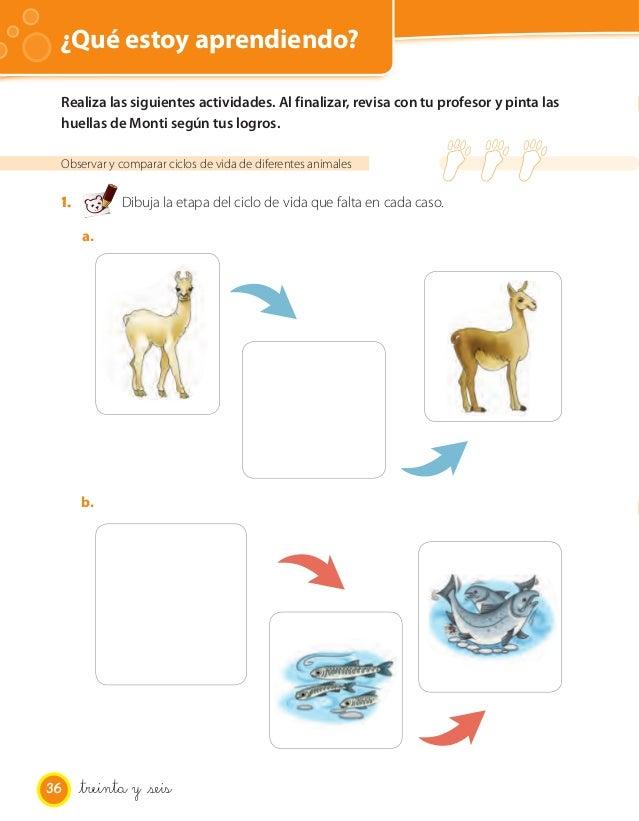 Metamorfosis de los anfibios yahoo dating 6