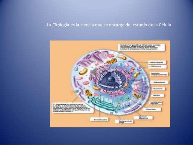 La Citología es la ciencia que se encarga del estudio de la Célula