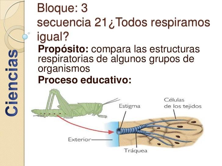 Bloque: 3secuencia 21¿Todos respiramos igual?<br />Propósito: compara las estructuras respiratorias de algunos grupos de o...