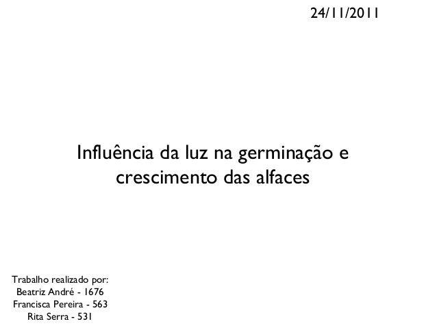 24/11/2011               Influência da luz na germinação e                    crescimento das alfacesTrabalho realizado po...