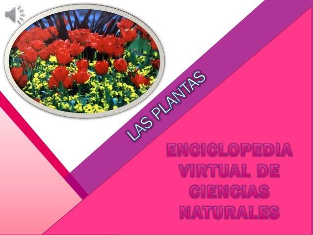 En esta enciclopedia virtual vamos a ver todo lo referente a las plantas ¿qué es? Las plantas, al igual que los animales, ...