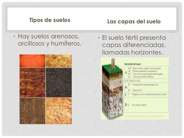 Ciencias naturales el suelo - Clases de suelo ...