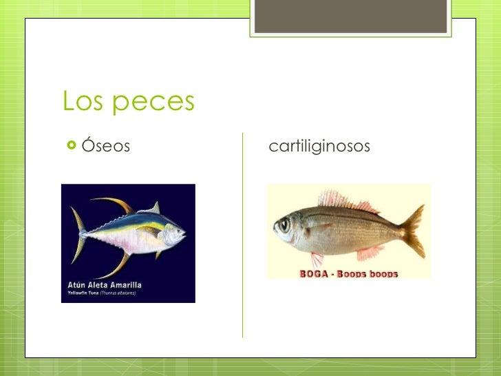 Ciencias naturales.teresa Slide 2