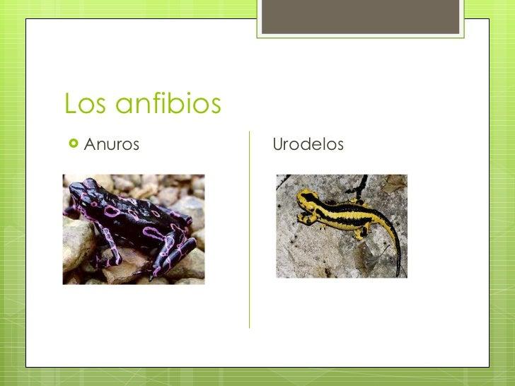 Ciencias naturales.teresa Slide 3