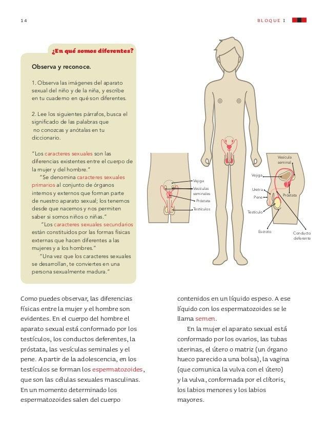 Increíble Imagen De Los órganos Del Cuerpo De La Mujer ...