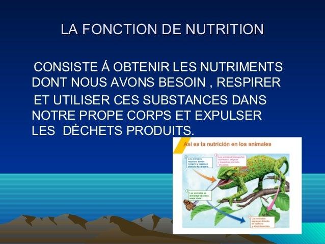 LLAA FFOONNCCTTIIOONN DDEE NNUUTTRRIITTIIOONN  CONSISTE Á OBTENIR LES NUTRIMENTS  DONT NOUS AVONS BESOIN , RESPIRER  ET UT...