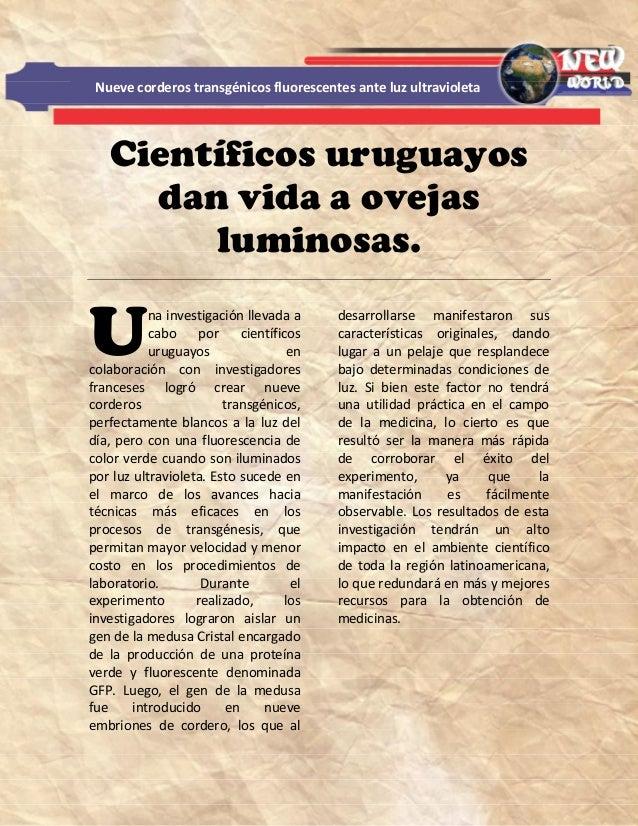 Científicos uruguayosdan vida a ovejasluminosas.na investigación llevada acabo por científicosuruguayos encolaboración con...