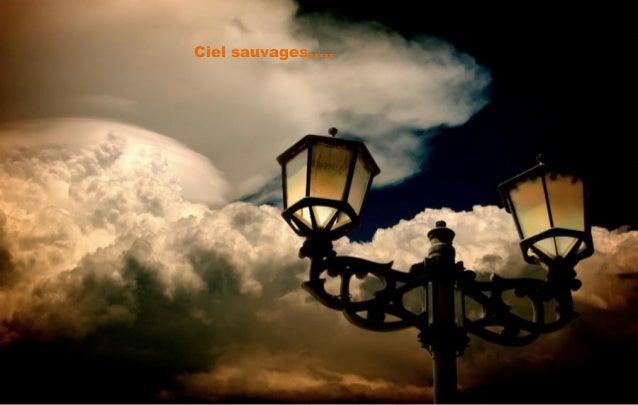 Ciel sauvages…..
