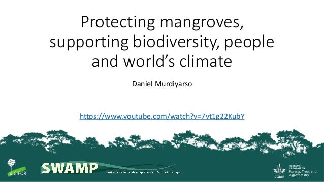 1 Protecting mangroves, supporting biodiversity, people and world's climate Daniel Murdiyarso https://www.youtube.com/watc...