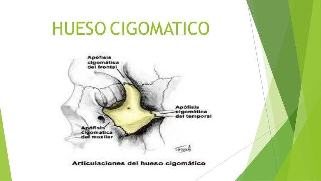Cigomatico[1]