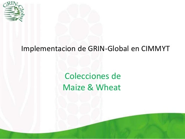 Implementacion de GRIN-Global en CIMMYT Colecciones de Maize & Wheat