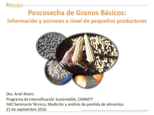 Poscosecha de Granos Básicos: Información y acciones a nivel de pequeños productores Dra. Ariel Rivers Programa de Intensi...