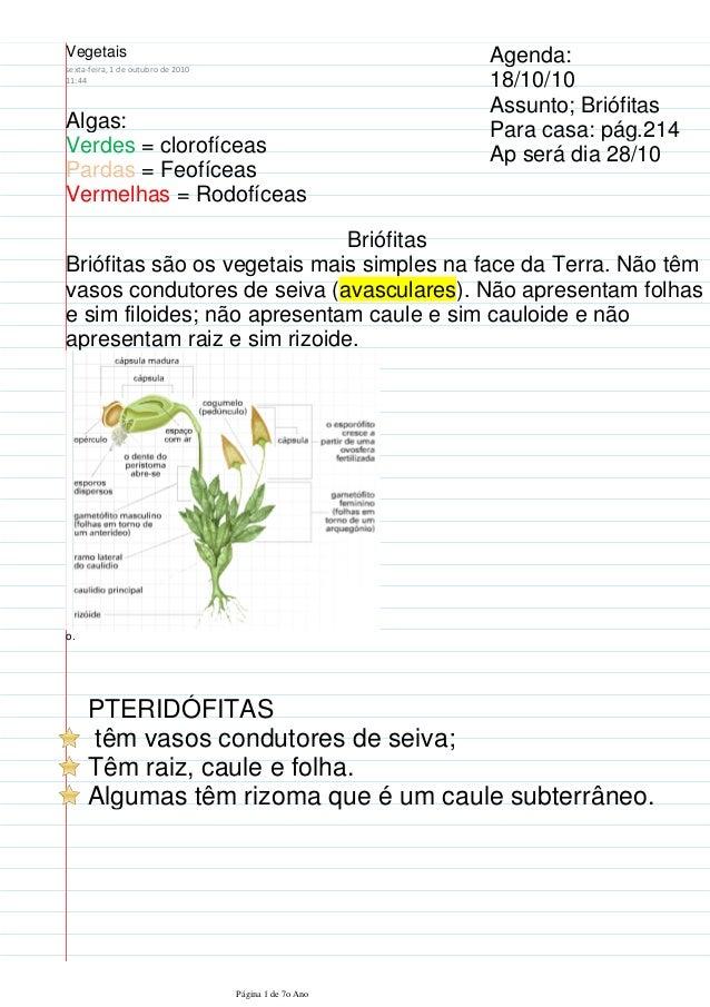 Algas: Verdes = clorofíceas Pardas = Feofíceas Vermelhas = Rodofíceas Agenda: 18/10/10 Assunto; Briófitas Para casa: pág.2...