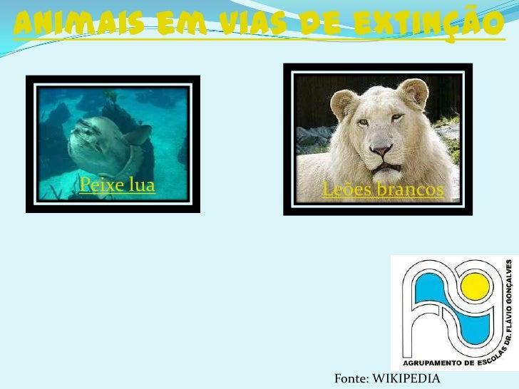 Animais em vias de extinção   Peixe lua    Leões brancos                 Fonte: WIKIPEDIA