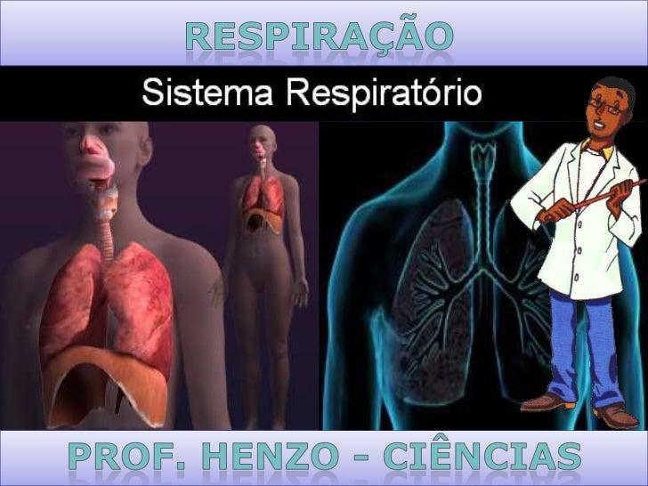 Fossas              nasais      Úvula              Epiglote   Faringe            Laringe      Traqueia                    ...