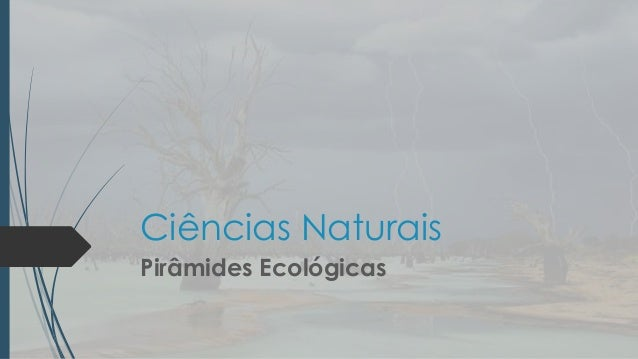 Ciências Naturais Pirâmides Ecológicas