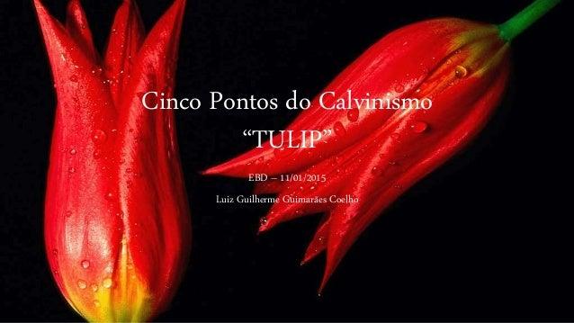 """Cinco Pontos do Calvinismo """"TULIP"""" EBD – 11/01/2015 Luiz Guilherme Guimarães Coelho"""