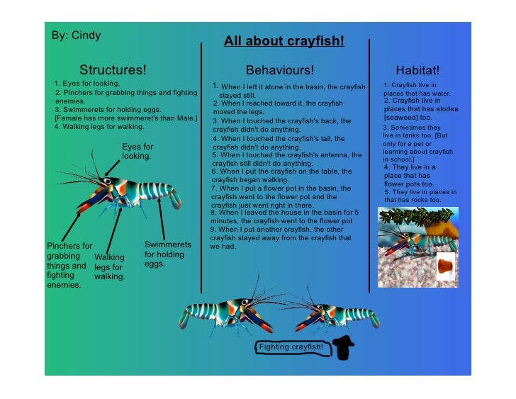 By: Cindy                                                     All about crayfish!          Structures!                    ...