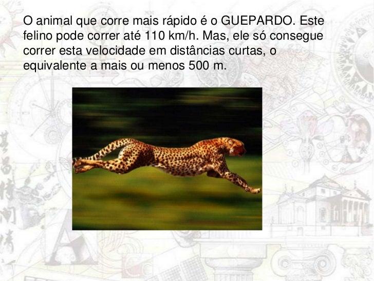 O animal que corre mais rápido é o GUEPARDO. Este felino pode correr até 110 km/h. Mas, ele só consegue correr esta veloc...