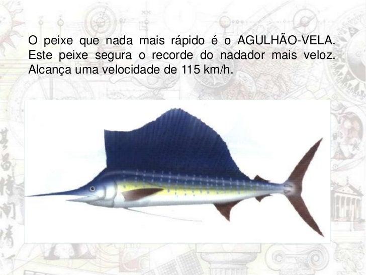 O peixe que nada mais rápido é o AGULHÃO-VELA. Este peixe segura o recorde do nadador mais veloz. Alcança uma velocidade d...
