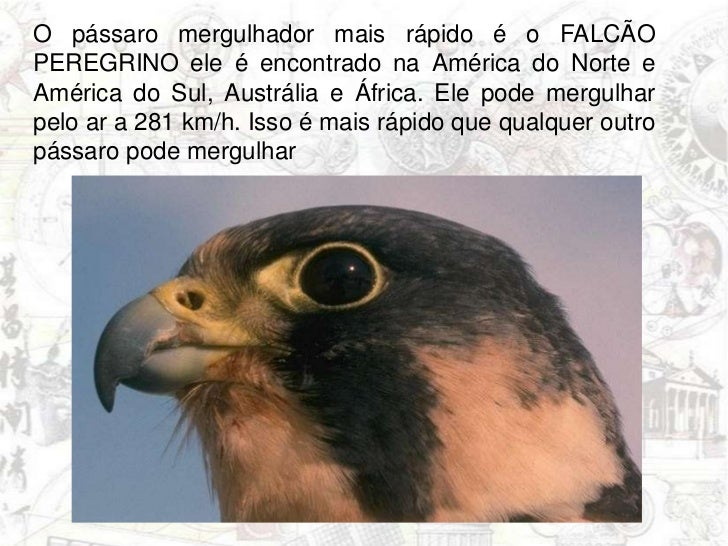 O pássaro mergulhador mais rápido é oFALCÃO PEREGRINO ele é encontrado na América do Norte e América do Sul, Austrália e Á...