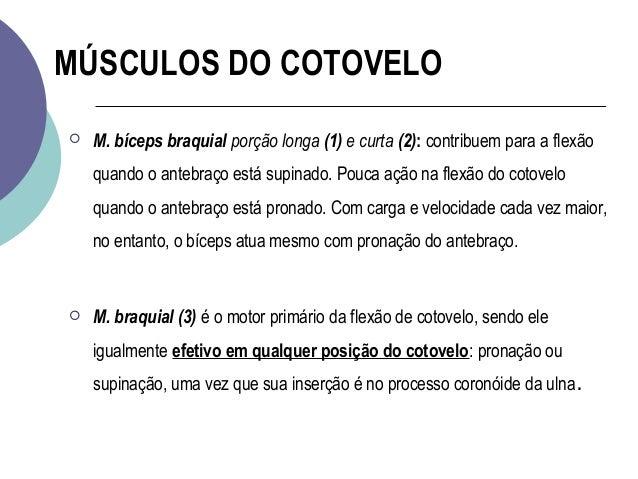 bcd4c891a41 Cinesiologia e biomecanica do cotovelo