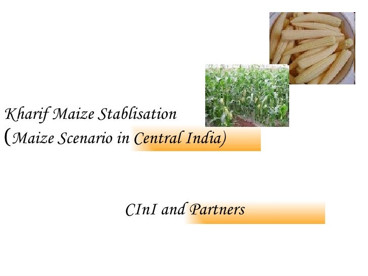 Kharif Maize Stablisation   ( Maize Scenario in Central India) CInI and Partners