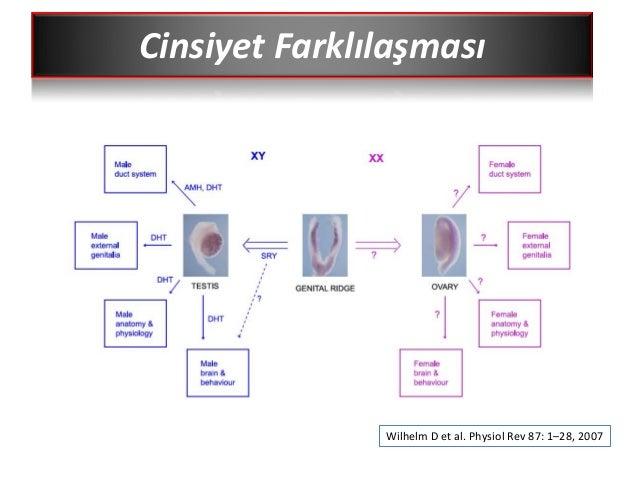 sf1 steroidogenic factor 1