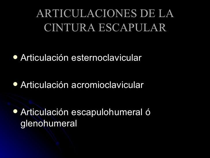 ARTICULACIONES DE LA CINTURA ESCAPULAR <ul><li>Articulación esternoclavicular  </li></ul><ul><li>Articulación acromioclavi...