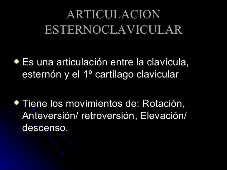 ARTICULACION ESTERNOCLAVICULAR <ul><li>Es una articulación entre la clavícula, esternón y el 1º cartílago clavicular </li>...