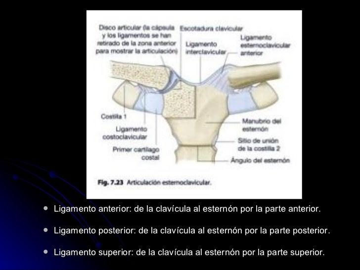 <ul><ul><li>Ligamento anterior: de la clavícula al esternón por la parte anterior. </li></ul></ul><ul><ul><li>Ligamento po...
