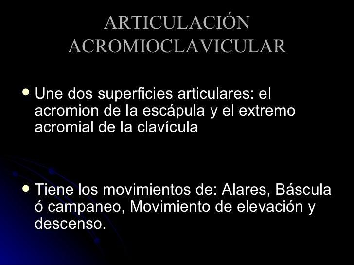 ARTICULACIÓN ACROMIOCLAVICULAR <ul><li>Une dos superficies articulares: el acromion de la escápula y el extremo acromial d...
