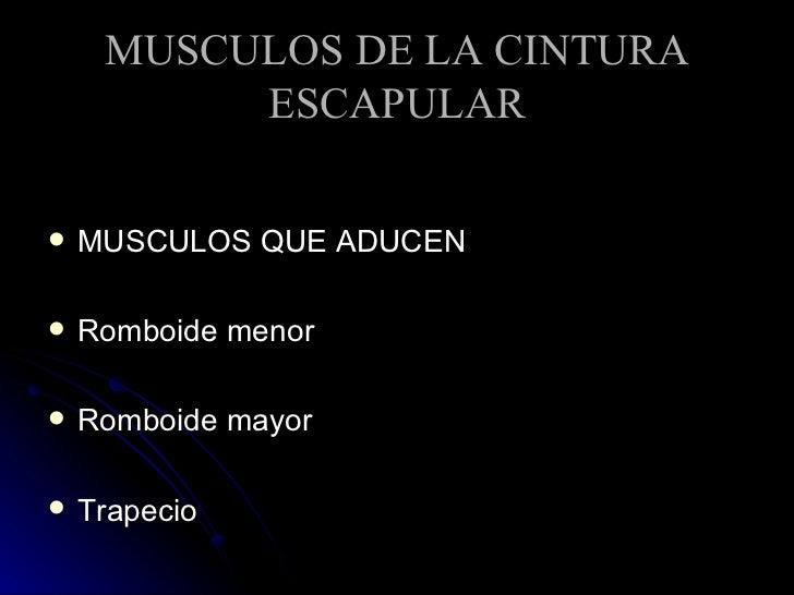 MUSCULOS DE LA CINTURA ESCAPULAR <ul><li>MUSCULOS QUE ADUCEN </li></ul><ul><li>Romboide menor </li></ul><ul><li>Romboide m...