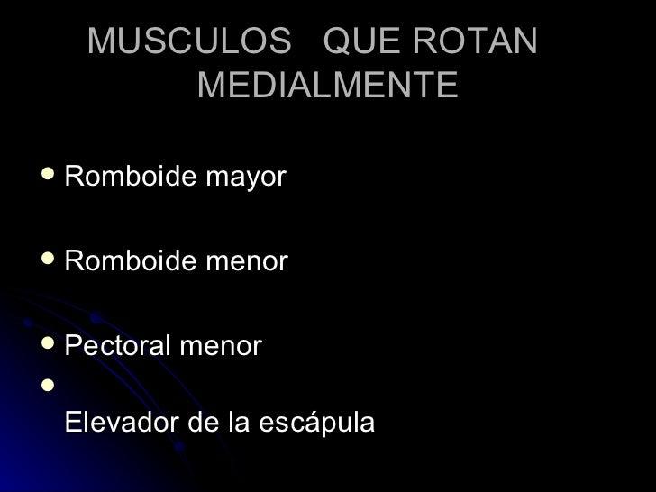MUSCULOS  QUE ROTAN  MEDIALMENTE <ul><li>Romboide mayor </li></ul><ul><li>Romboide menor </li></ul><ul><li>Pectoral menor ...