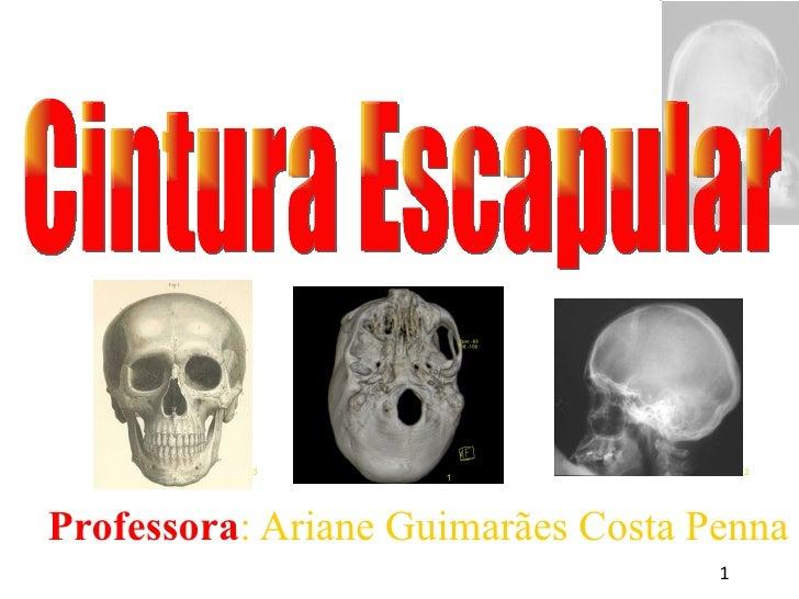<ul><ul><li>Professora : Ariane Guimarães Costa Penna </li></ul></ul>Cintura Escapular 1 3 2
