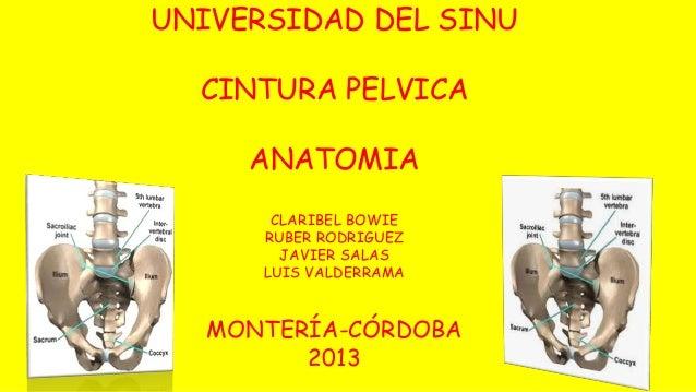 UNIVERSIDAD DEL SINU  CINTURA PELVICA  ANATOMIA  CLARIBEL BOWIE  RUBER RODRIGUEZ  JAVIER SALAS  LUIS VALDERRAMA  MONTERÍA-...