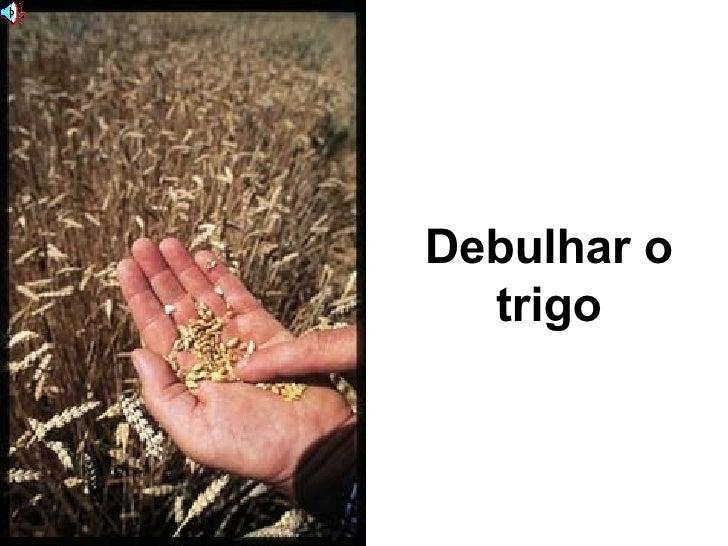 Debulhar o trigo