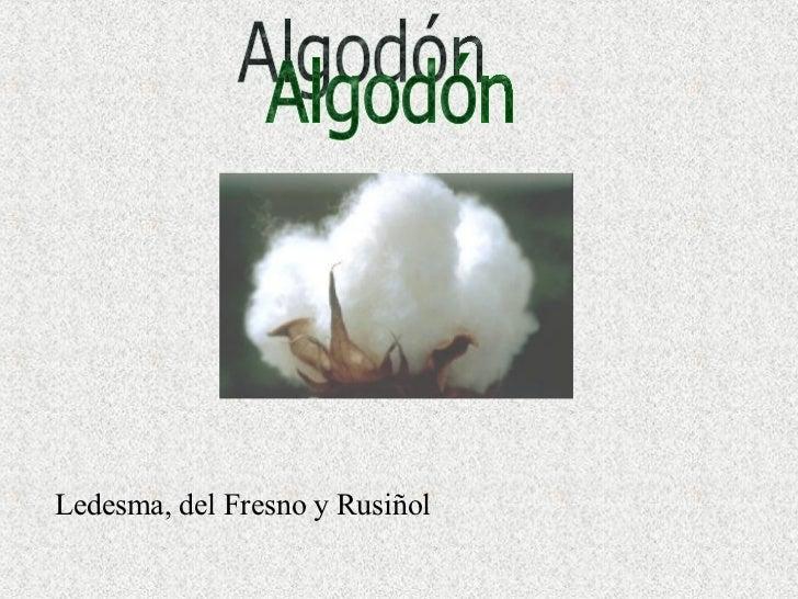 Ledesma, del Fresno y Rusiñol Algodón