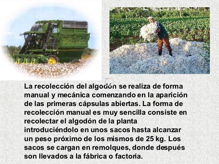 Circuito Productivo Del Algodon : Circuito productivo algodón