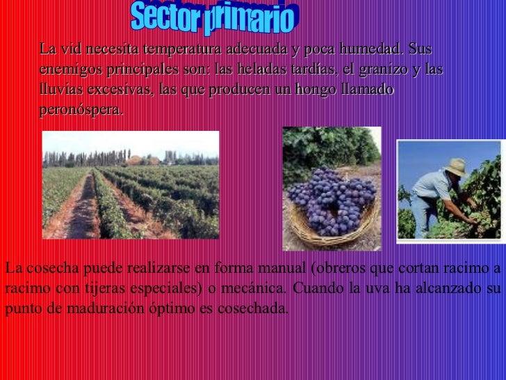 Circuito Productivo Del Vino : Circuito productivo vinos