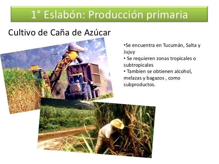 Circuito Productivo De La Caña De Azucar : Circuito cañero
