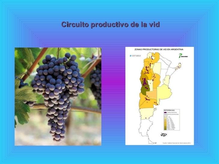 Circuito Productivo Del Vino : Circuito pproductivo de la vid colegio norbridge