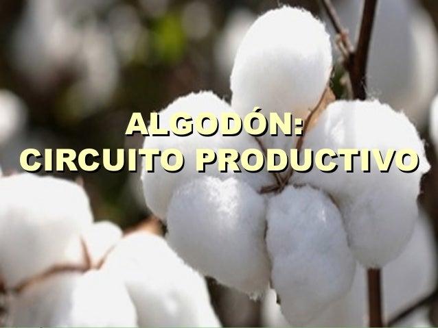 Circuito Productivo : Circuito productivo del algodÓn