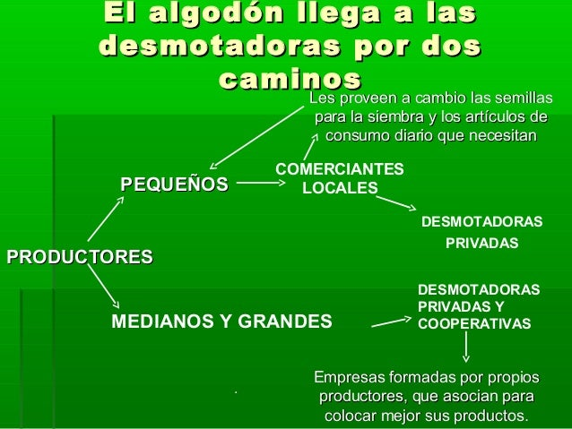 Circuito Productivo Del Algodon : Circuito productivo del algodÓn