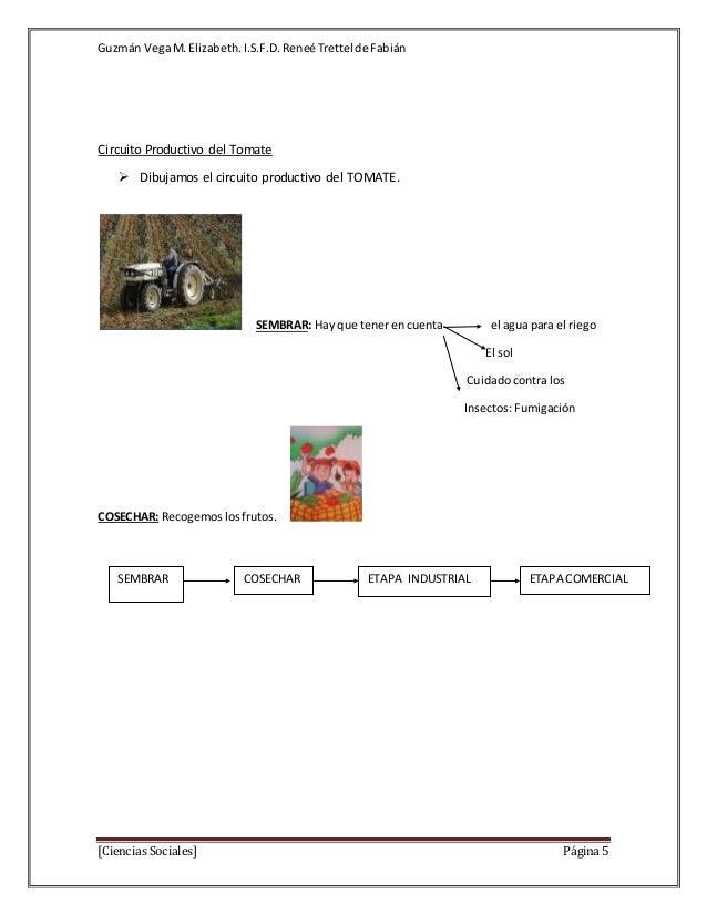 Circuito Productivo Del Tomate : Circuito productivo